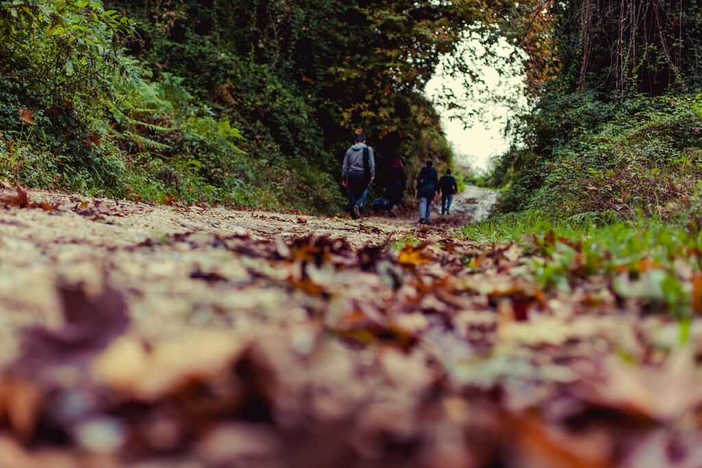 people hiking in a trail